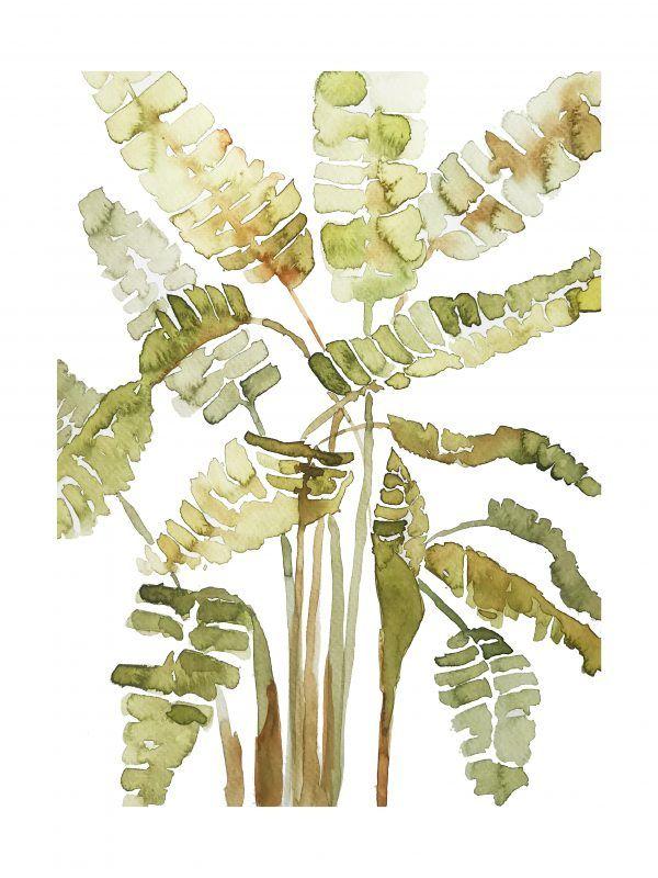 Hojas de Banano Verde