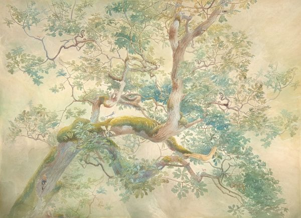 Mural papel pintado Deep Forest