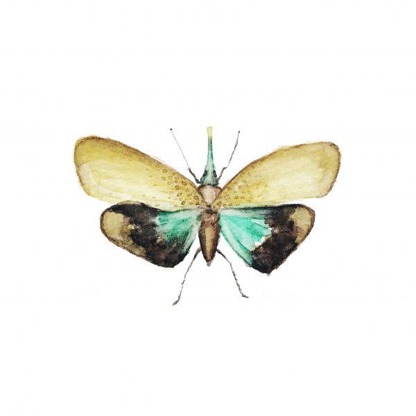 Print Mariposario – Mariposa Trompeta
