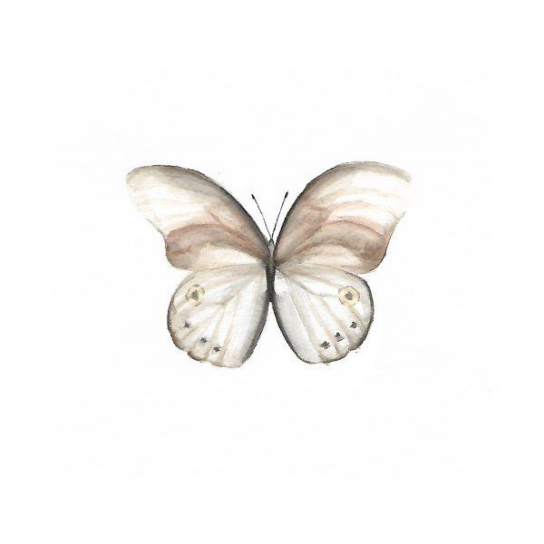 Print Mariposario – Mariposa Marrón