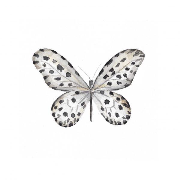 Print Mariposario – Mariposa Dálmata