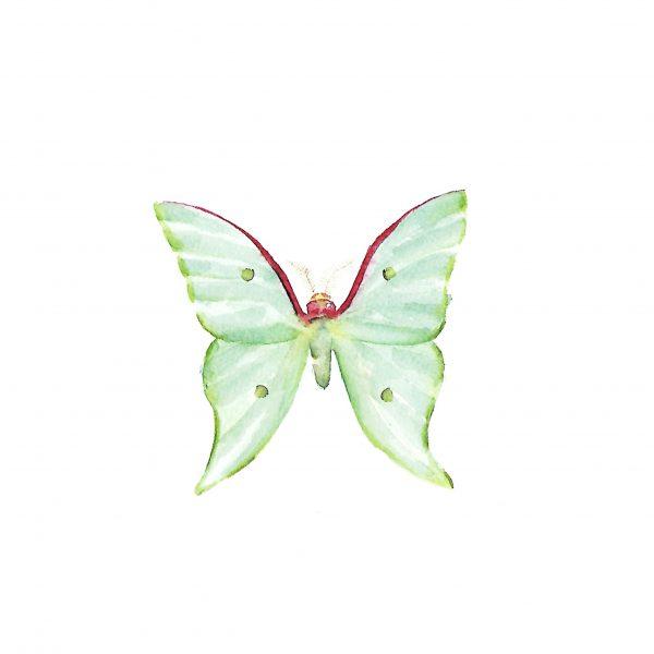 Print Mariposario – Mariposa Verde