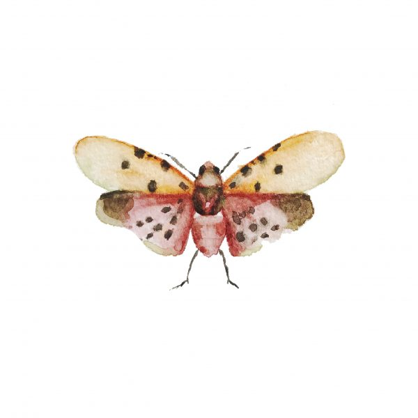 Print Mariposario – Mariposa Lunares