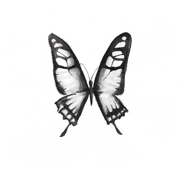 Print Mariposario – Mariposa Blanca y Negra