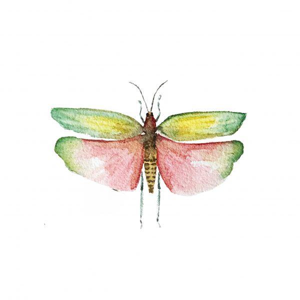 Print Mariposario – Saltamontes Colores