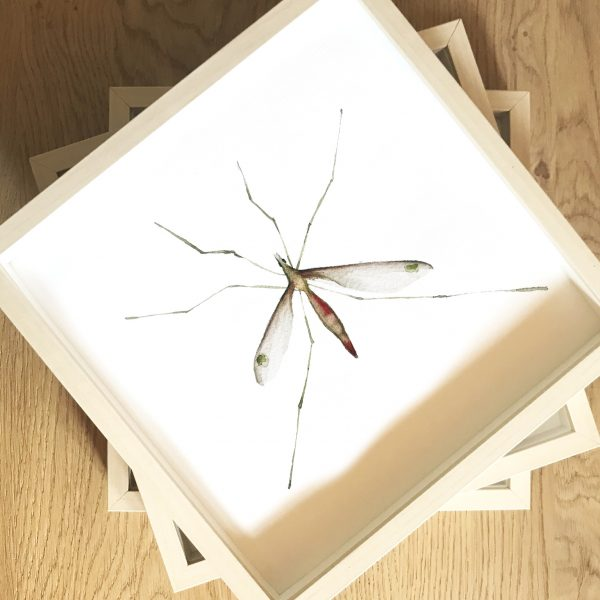 Print Mariposario – Mosquito
